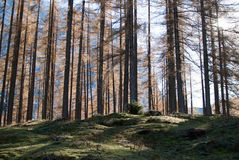 Alpe wood. Typical alp wood in Slovenia Stock Photography