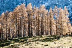 Alpe wood. Typical alp wood in Slovenia Royalty Free Stock Image
