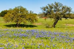 Alpeggio del Texas Immagine Stock Libera da Diritti