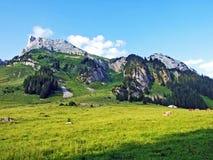 Alpejscy paśniki i łąki na skłonach Alpstein pasmo górskie w rzecznej Thur dolinie i zdjęcia stock