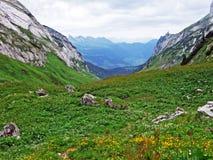 Alpejscy paśniki i łąki na skłonach Alpstein pasmo górskie w rzecznej Thur dolinie i obrazy stock