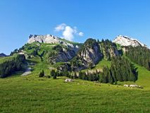 Alpejscy paśniki i łąki na skłonach Alpstein pasmo górskie w rzecznej Thur dolinie i obrazy royalty free