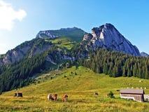 Alpejscy paśniki i łąki na skłonach Alpstein pasmo górskie w rzecznej Thur dolinie i zdjęcie royalty free