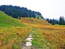 Alpejscy paśniki i łąki w Obertoggenburg regionie, Stein obrazy royalty free