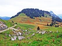 Alpejscy paśniki i łąki w Obertoggenburg regionie, Stein zdjęcia royalty free