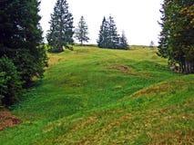Alpejscy paśniki i łąki w Obertoggenburg regionie, Stein zdjęcia stock