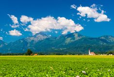 Alpejska łąka z kwiatami, Slovenia Fotografia Stock