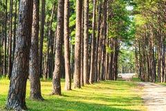 Alpejska drzewna linia Obrazy Royalty Free