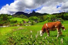 Alpejska sceneria obraz royalty free