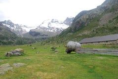 Alpejski gospodarstwo rolne obrazy royalty free
