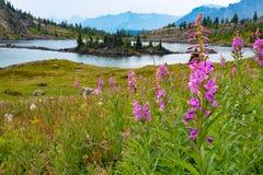 Alpejski jezioro i góry w światło słoneczne łąkach, Alberta Obraz Royalty Free