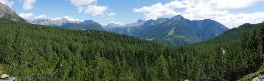 Alpejski krajobraz w lecie w Valmalenco Zdjęcie Stock