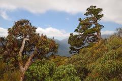 Alpejski las Obraz Stock