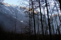 Alpejski las wokoło królewiątka jeziora Fotografia Royalty Free