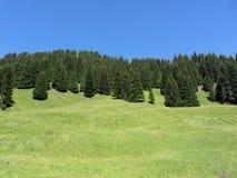 Alpejski paśnik przeciw niebieskiemu niebu przy latem Południowy Tyrol, Bolzano, Włochy fotografia stock