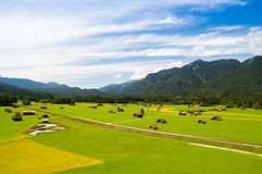 Alpejski paśnik Fotografia Royalty Free