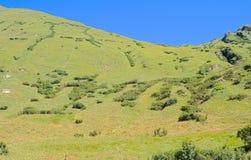 Alpejski skłon Zdjęcia Stock