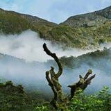 Alpejski tropikalny las deszczowy Zdjęcie Royalty Free