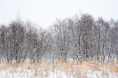 Alpejski zima krajobraz w Transylvanian Alps Obrazy Stock