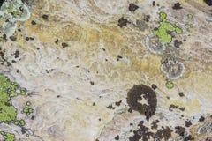 Alpejskie łąki Taganay Zdjęcie Stock