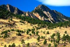 Alpejskie sosny na słonecznym dniu z Strzępiastymi górami w półdupkach Zdjęcia Royalty Free