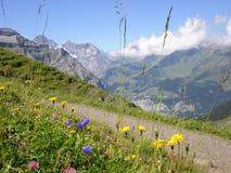 alpen blommar grindelwald switzerland Arkivbild