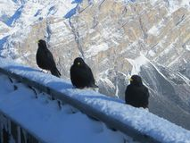 Alpen in der Winterzeit Stockfotografie