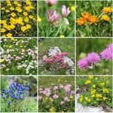 Alpen-Floracollage, Reihe 2 Stockfotos