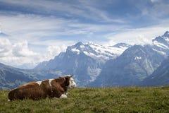 Alpen i royalty-vrije stock afbeeldingen