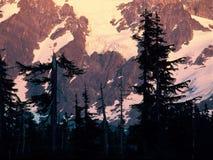 Alpenglow på monteringen Shuksan, norr kaskader nationalpark, Washington fotografering för bildbyråer