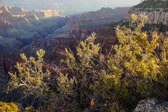 Alpenglow paints the cliffs and ridges Stock Photos