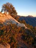 Alpenglow sulla quercia di sfregatura Immagine Stock