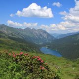 Alpenrosen, λίμνη Arnensee και βουνά Στοκ φωτογραφίες με δικαίωμα ελεύθερης χρήσης