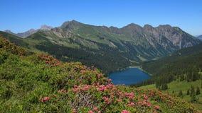 Alpenrosen και μπλε λίμνη Arnensee Στοκ φωτογραφία με δικαίωμα ελεύθερης χρήσης