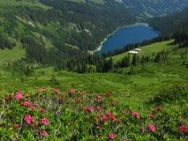 Alpenrosen e lago Arnensee Fotografia Stock