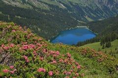Alpenrosen e lago Arnensee Immagine Stock
