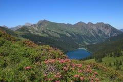 Alpenrosen e lago Arnensee Fotografia Stock Libera da Diritti