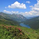 Alpenrosen, lago Arnensee e montagne Fotografie Stock Libere da Diritti