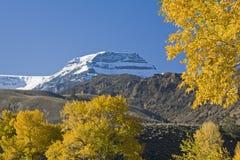 Alpenschneehuhn-Berg Lizenzfreie Stockbilder
