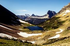 Alpenschneehuhn-Tunnelblick Lizenzfreies Stockfoto