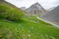 Alpenweide Stock Afbeelding