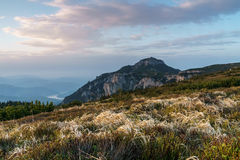 Alpenwiese bei Sonnenuntergang Stockbild