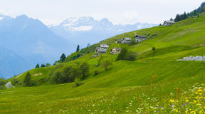 Alpenwiesen in der Schweiz Stockbild