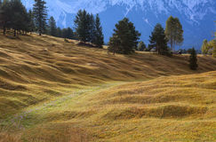 Alpenwiesen im Bayern Stockfoto