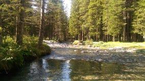 Alpes的小河 库存照片