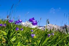 Alpes Fotografia Stock Libera da Diritti