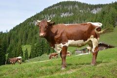 Alpes bavaroises photo libre de droits