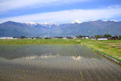 Alpes du Japon et rizière Image stock