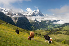 Alpes em Switzerland foto de stock royalty free