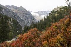 Alpes en automne avec de l'or et la bruyère brune Image stock